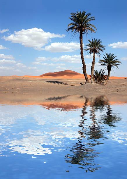 Palm Trees near the Lake in the Sahara Desert stock photo
