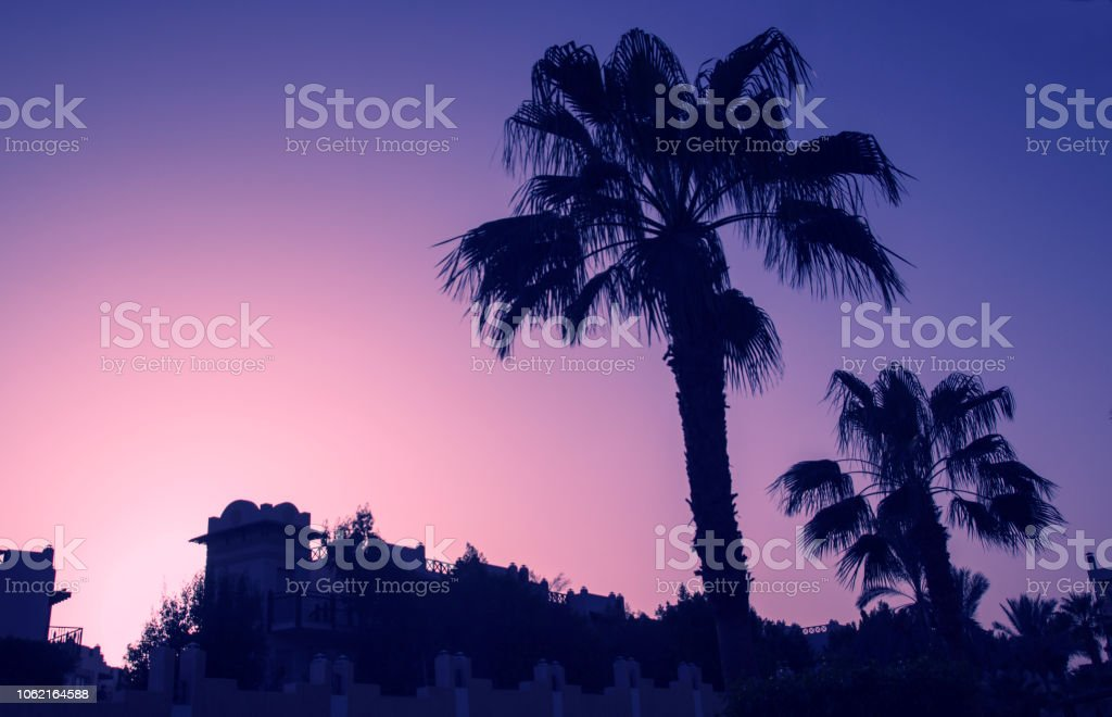 Palm trees, new retro wave, rest on the sea stock photo