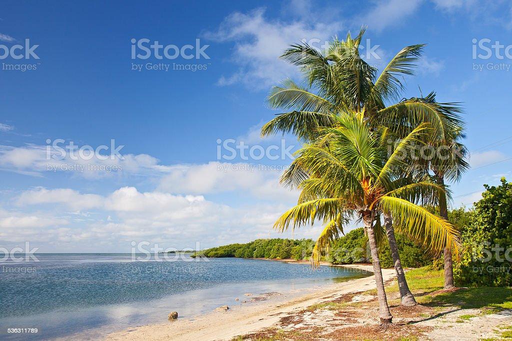 Palm trees, ocean and blue sky on tropical Florida beach stock photo