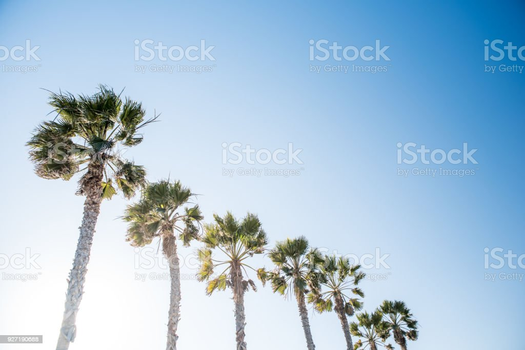 Palm Trees of Southern California stock photo