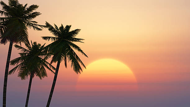 palm trees on a background of tropical sunrise – Foto