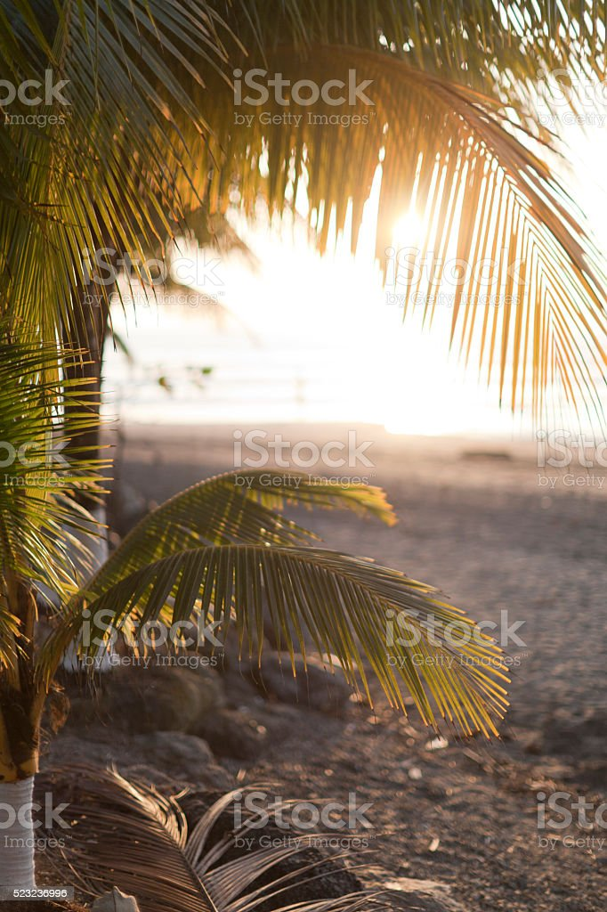Palm trees on a beach during sunset in Costa Rica stock photo
