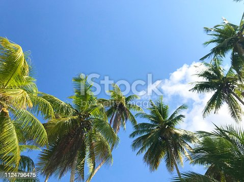 1145102719istockphoto Palm trees on a beach in Costa Rica 1124796475