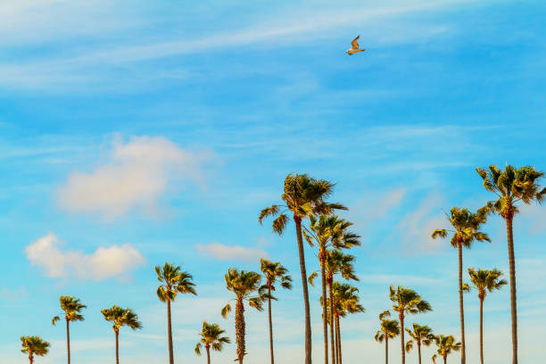 Palm Trees on a Breeze Day stock photo