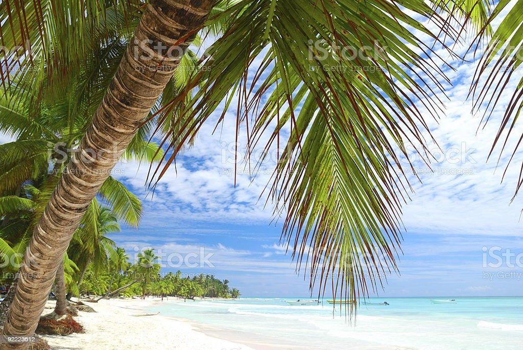 Palm trees on a Caribbean beach royalty-free stock photo