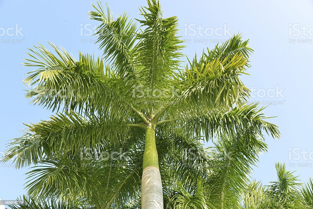 Palm Trees on a Sunny Day stock photo