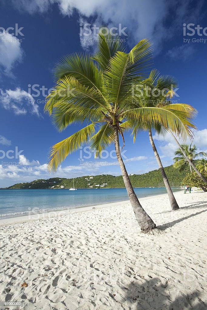 Palm trees on a tropical beach in US Virgin Islands stock photo