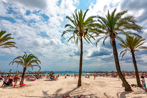 Palm trees on Alcudia beach, Mallorca, Balearic islands, Spain