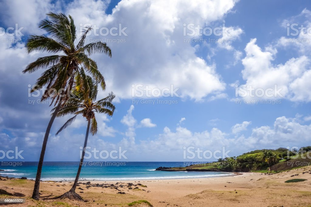 Palm trees on Anakena beach, easter island stock photo