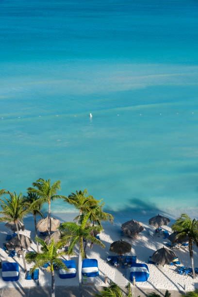 Palmen am Strand von Aruba. – Foto