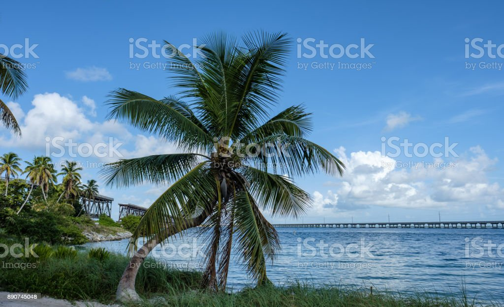Palm trees on Bahia Honda Key with the old Flagler Pin-connected truss bridge in the background over the gorgeous Florida Keys stock photo