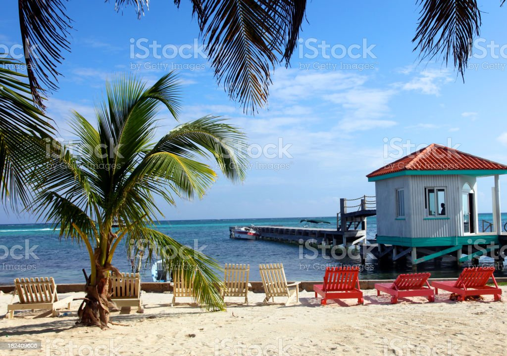 Palm Trees on Beach in Belize royalty-free stock photo