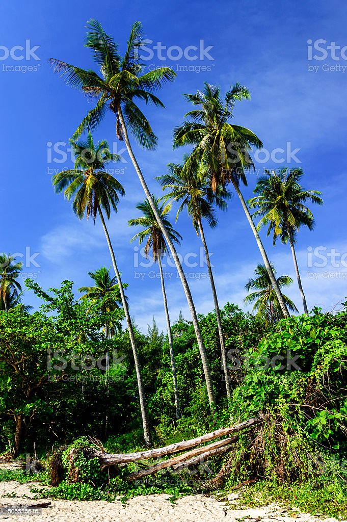 Palm trees on beach, Southern Thailand stock photo