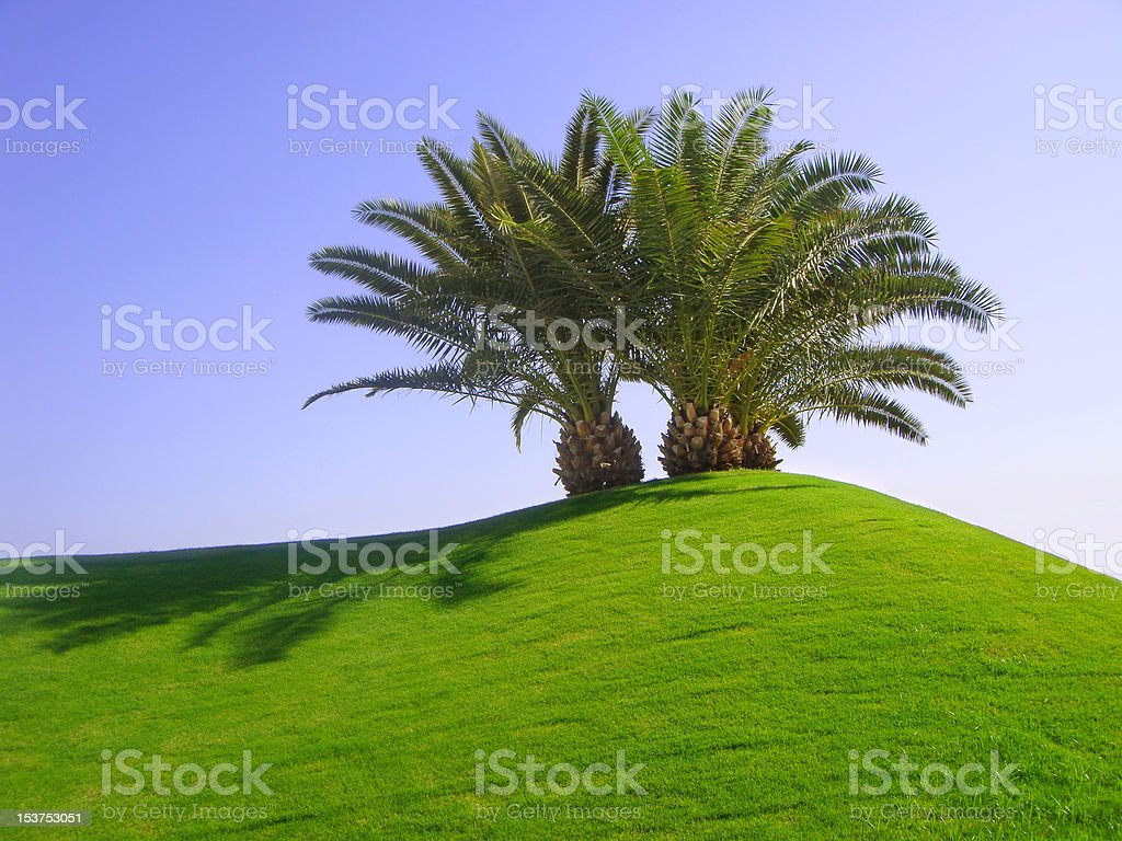 Palm trees on green grass stock photo