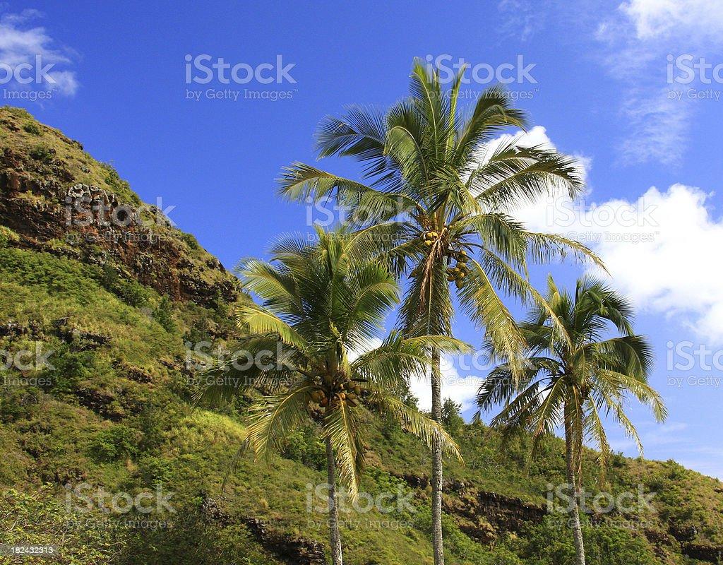 Palm trees on Hawaii royalty-free stock photo