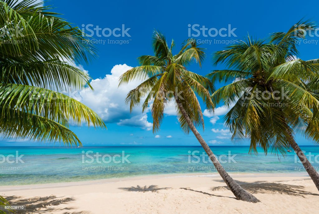Palm trees on idyllic white sand beach stock photo