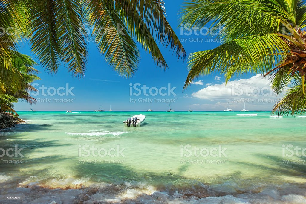 Palm trees on luxury exotic beach stock photo
