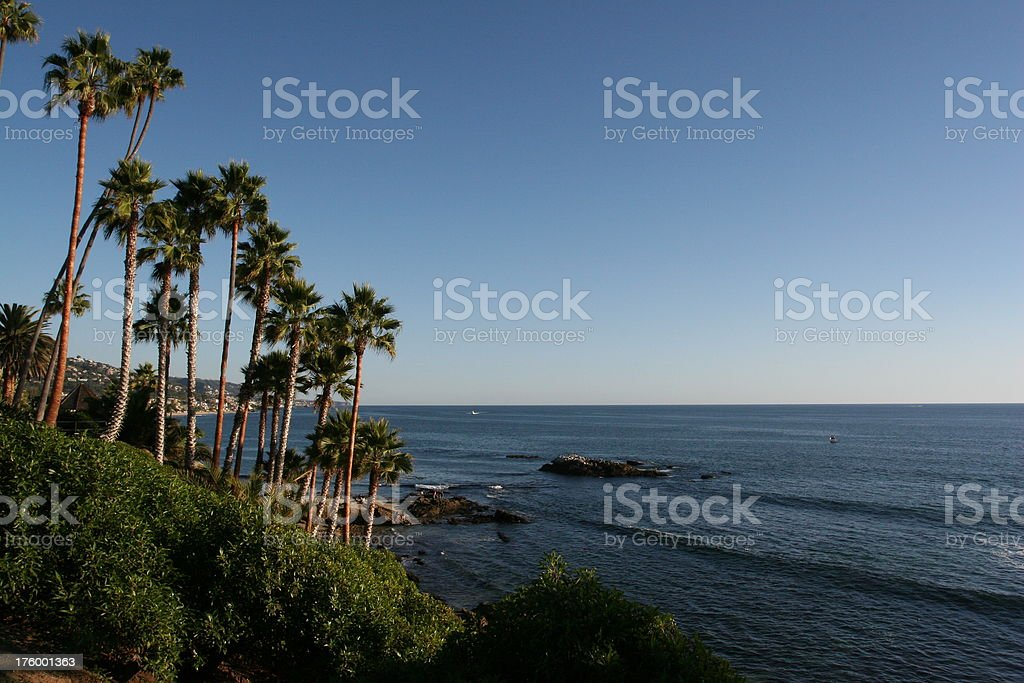 Palm trees on rocky cliff royalty-free stock photo