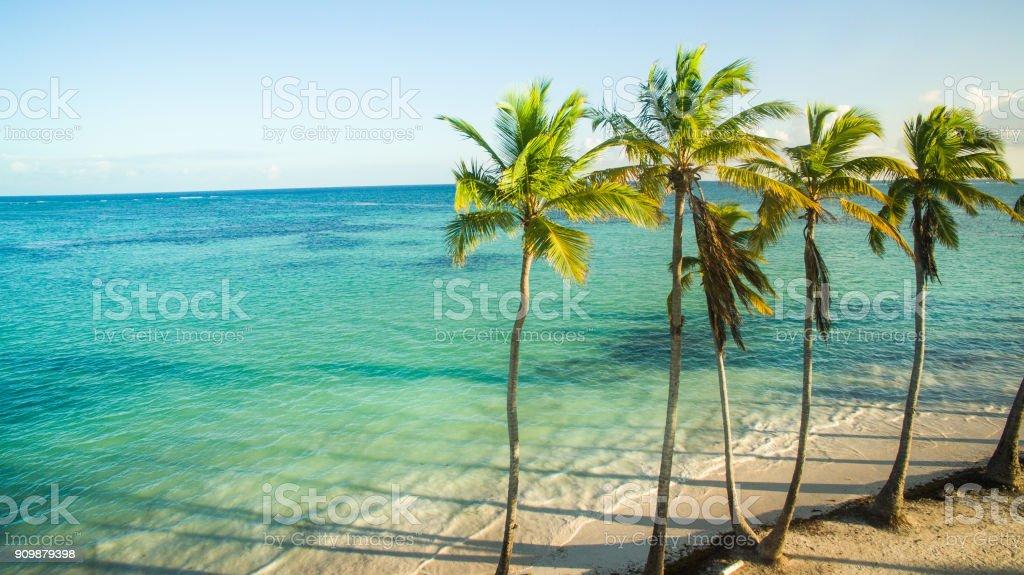 Palmen am Sandstrand – Foto