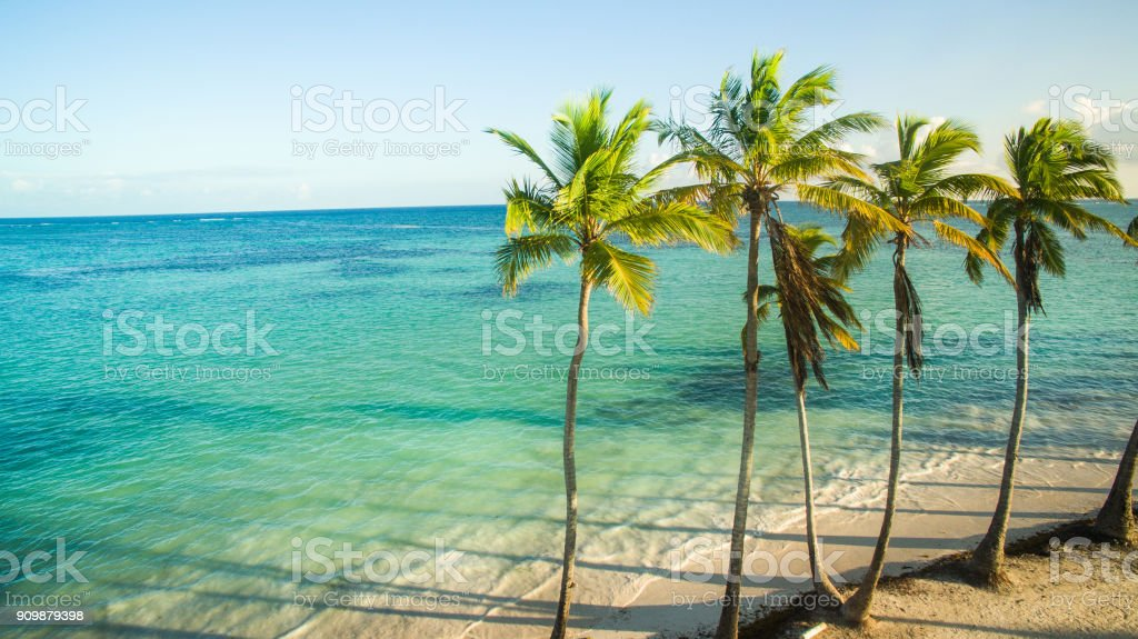 Palm trees on sandy beach stock photo