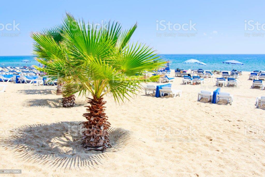 Palmiye ağaçlarının yaz deniz plaj üzerinde Alanya'da güneşli yaz günü temizleyin. Beyaz kum üzerinde relax resort beach'Türkiye ' nin geri kalan. Tropikal plaj yaz tatili. stok fotoğrafı