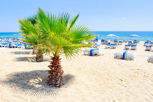 Palm trees on summer sea beach in Alanya on clear sunny summer day. White sand on relax resort beach in Turkey rest. Summer vacation on tropical beach. stock photo