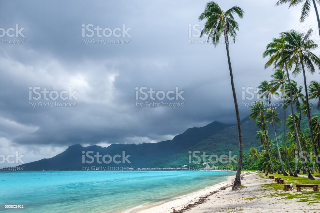 Palm trees on Temae Beach in Moorea island royalty-free stock photo