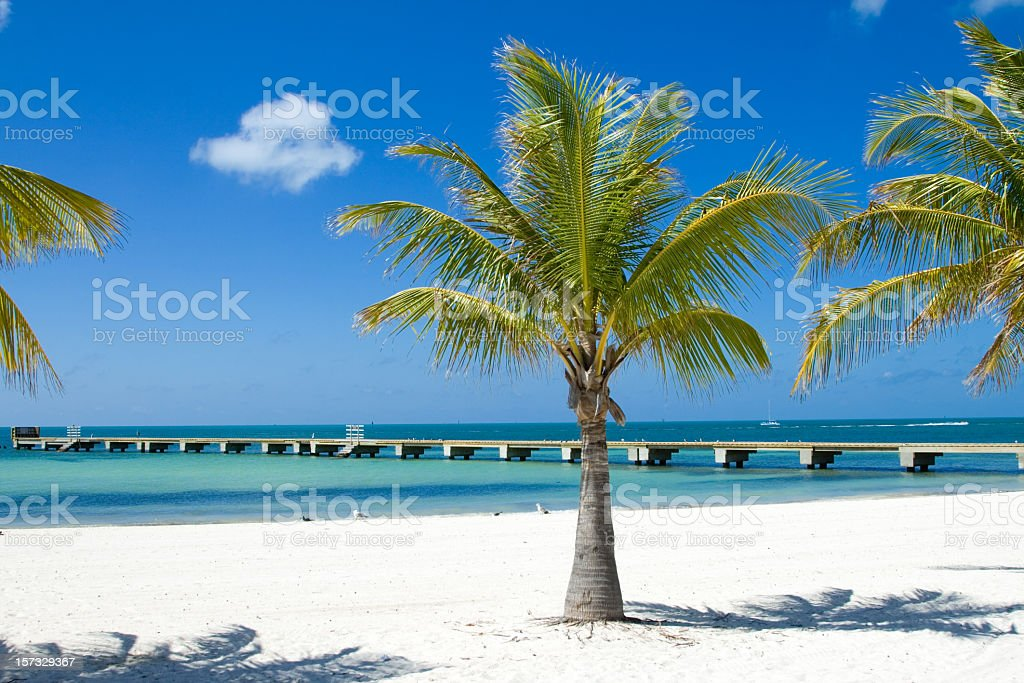 Palm trees on the beach and a long pier stock photo