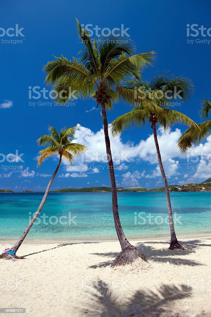 palm trees on the beach in Secret Harbour, St. Thomas royalty-free stock photo