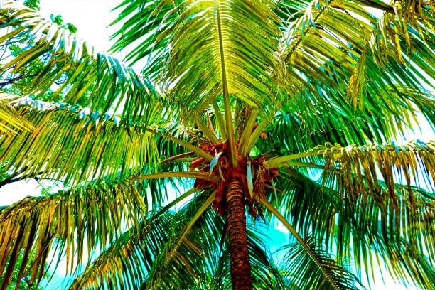Palm trees on the beach near the ocean in Costa Maya, Mexico stock photo