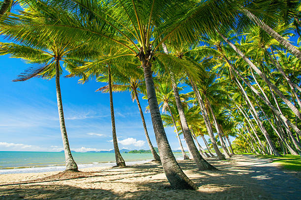 Palm trees on the beach of Palm Cove Palm trees on the beach of Palm Cove in Australia bay of water stock pictures, royalty-free photos & images