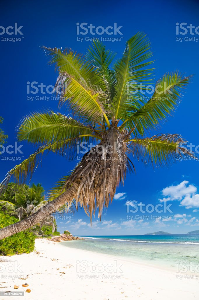 Palm trees on the beach of Seychelles stock photo