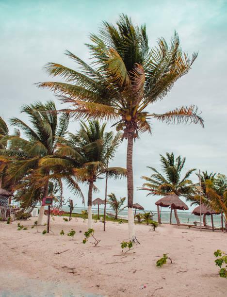 Palm trees on the beach stock photo