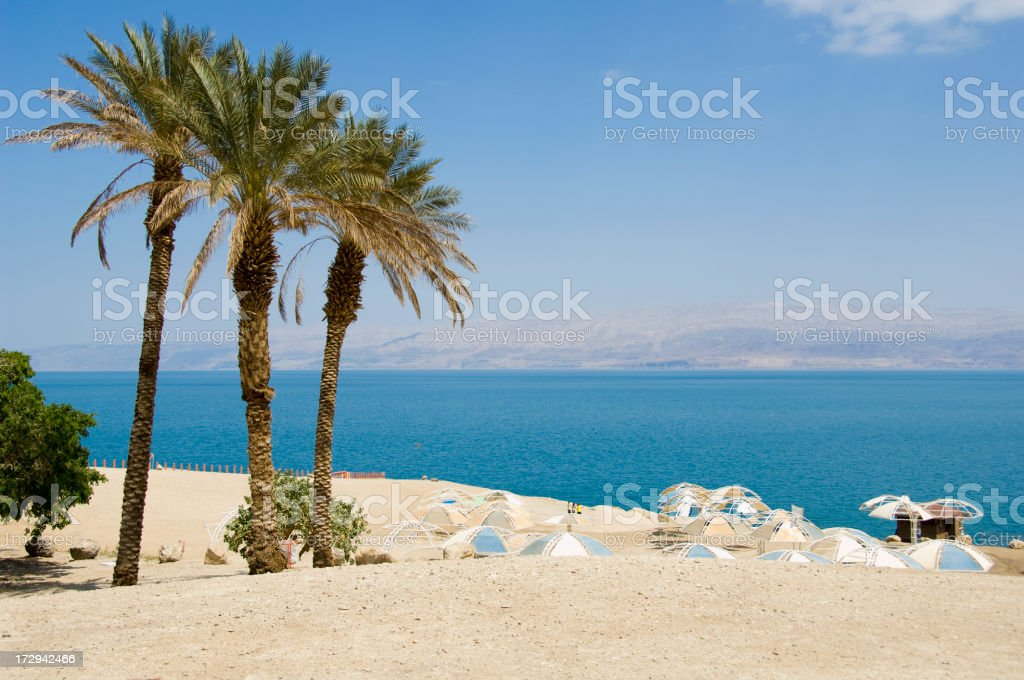 Palm Trees on the Dead Sea stock photo