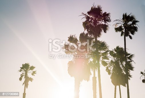 Los Angeles, California. Palms in the rays of the evening sun. Rest on Venice Beach
