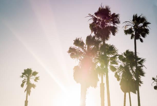palmen an der pazifikküste in los angeles - venice beach in kalifornien stock-fotos und bilder
