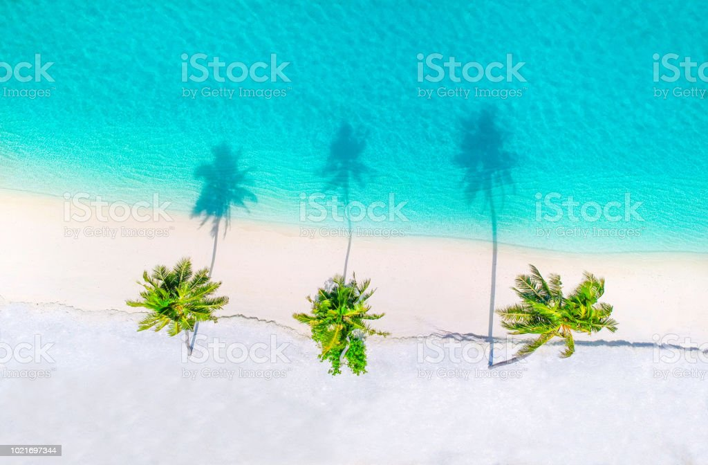 Palm trees on the sandy beach and turquoise ocean from above foto stock royalty-free