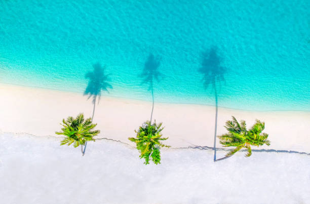 Palm trees on the sandy beach and turquoise ocean from above Palm trees on the sandy beach and turquoise ocean from above oceania stock pictures, royalty-free photos & images
