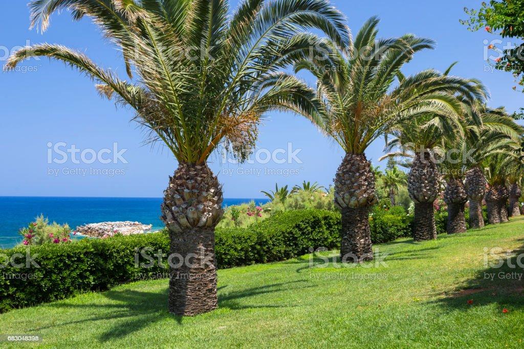 Palm trees on the seaside, Crete foto de stock royalty-free
