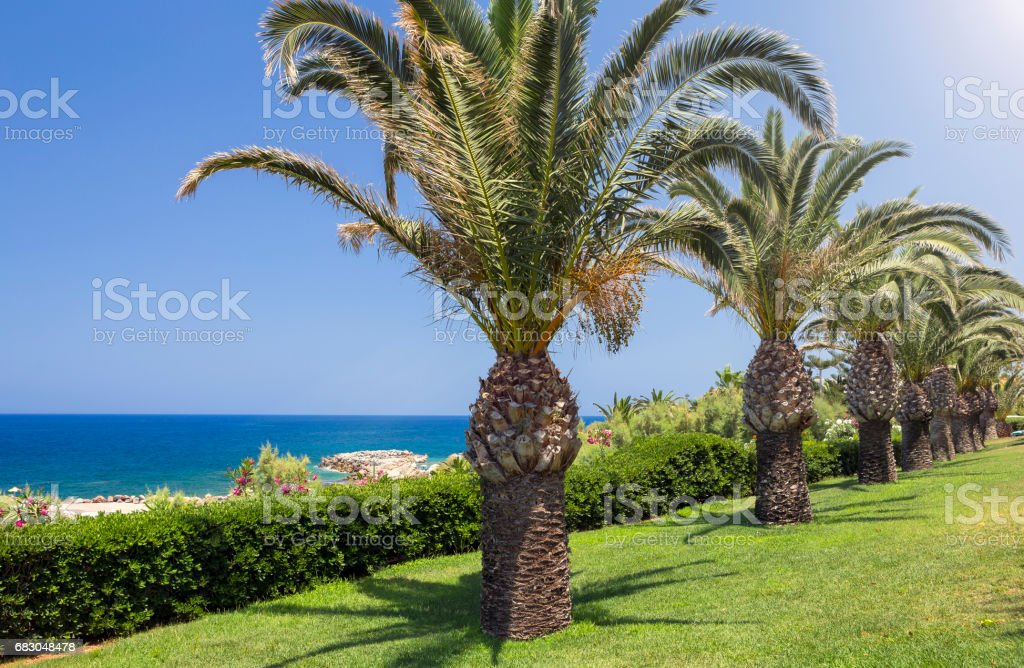 Palm trees on the seaside, Crete royalty-free stock photo