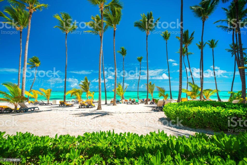 Palmen am tropischen Strand, Dominikanische Republik, Punta Cana – Foto