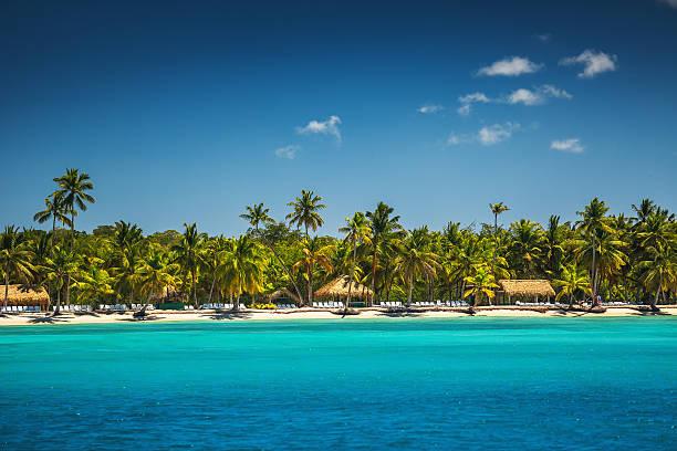 Palmen am tropischen Strand – Foto