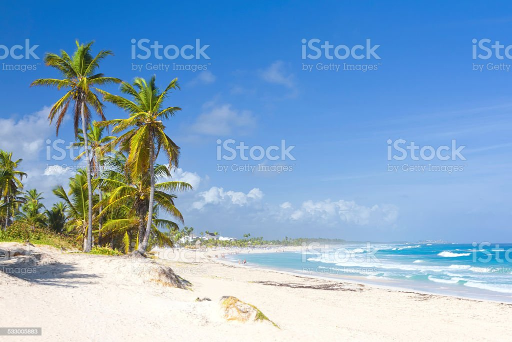 Palm trees on the tropical beach stock photo