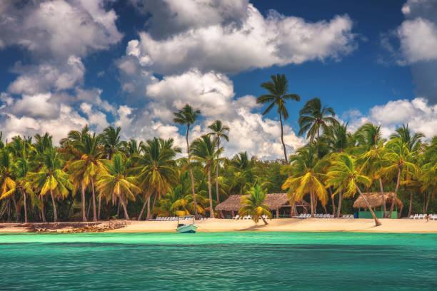Palmen am tropischen Strand, Saona Island Reserve, Dominikanische Republik – Foto