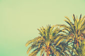 Palm Trees on Toned Turquoise Sky Background. 60s Vintage Style Copy Space for Text. Tropical Foliage. Seaside Ocean Beach Vacation. Hip Funky Vintage Toning
