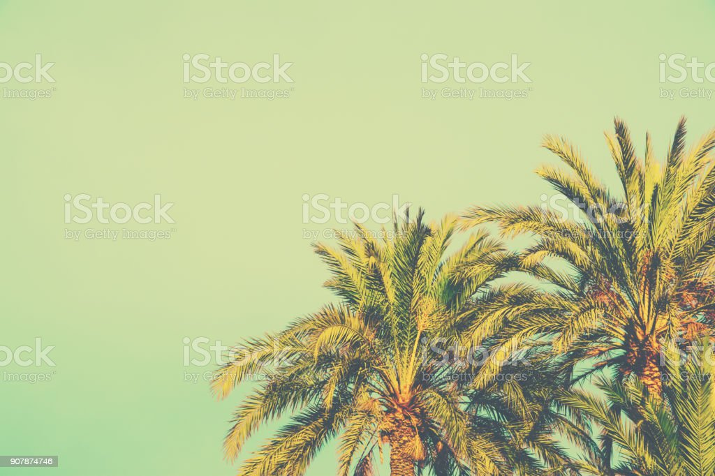 Palm Trees on Toned Light Turquoise Sky Background. 60s Vintage Style Copy Space for Text. Tropical Foliage. Seaside Ocean Beach Vacation. Hip Funky Vintage Toning stock photo