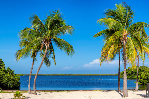 Palm trees on tropical beach in Florida Keys.florida stock photo