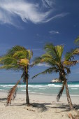 DSLR picture of palm trees on a tropical beach of the Margarita Island in Venezuela. It is a sunny day but windy as the palm trees leaves are agitated by the wind, as well as the sea in the background.