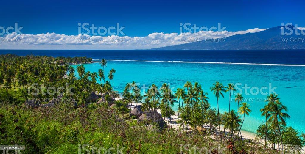 Palm trees on tropical beach of Moorea island with the view of Tahiti Palm trees on tropical beach of Moorea island with the view of Tahiti, French Polynesia Beach Stock Photo