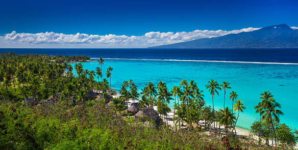 Palm Trees On Tropical Beach Of Moorea Island With The View Of Tahiti Stock Photo - Download Image Now